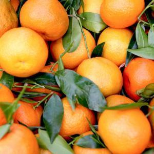 Amanida d'escarola, taronja i pastanaga