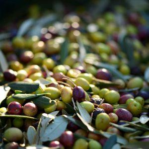Conserva d'olives